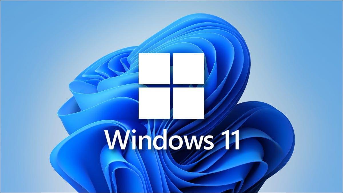 windows 11 fondo de pantalla flor hojas tulipas azul sobre fondo azul claro